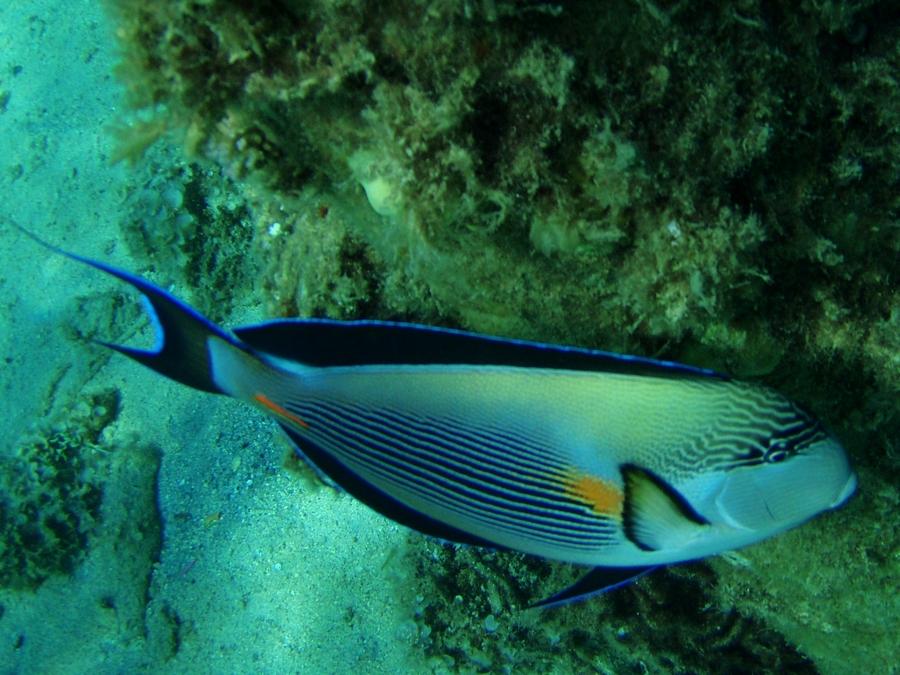 Potápění v Hurghade